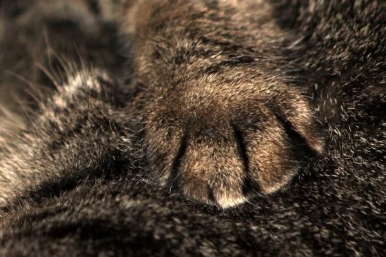 Milo's paw