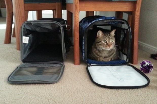 Olli in carrier
