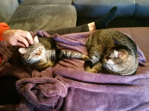 2016-01-08kitties